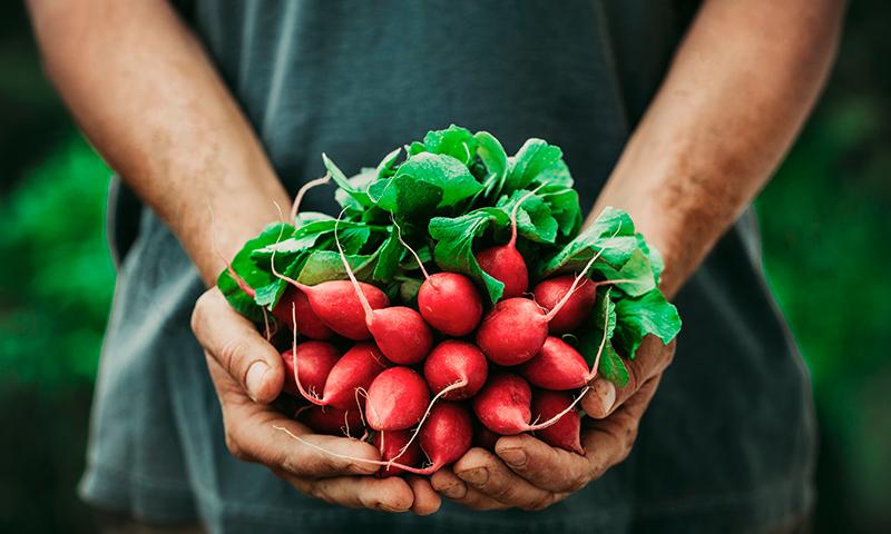 AgroCare links of interest
